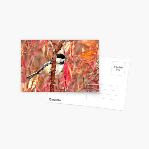 Chickadee in Sumac Postcard