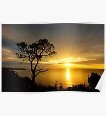 Sheoak Sunset Poster