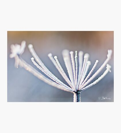 Frozen Stem Photographic Print