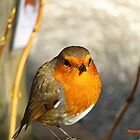 """"""" Not another Robin"""" by Malcolm Chant"""