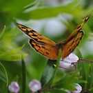 The Butterfly Effect by Heather Samsa