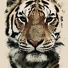 tiger of asia by MotionAge Media