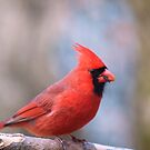 Red all over! by Penny Rinker