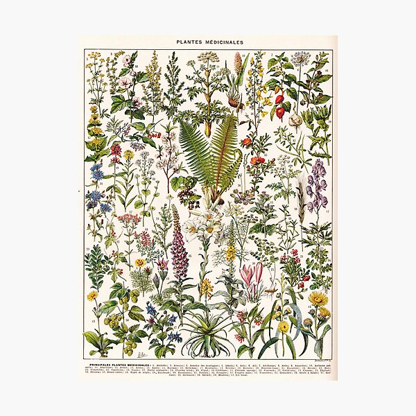 Adolphe Millot - Plantes Medicinales B - French vintage poster Photographic Print