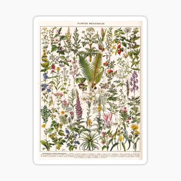 Adolphe Millot - Plantes Medicinales B - French vintage poster Sticker