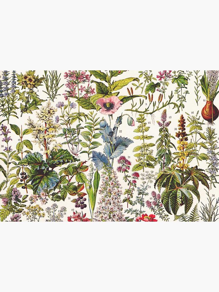 Adolphe Millot - Plantes Medicinales A - French vintage poster by DejaVuStudio