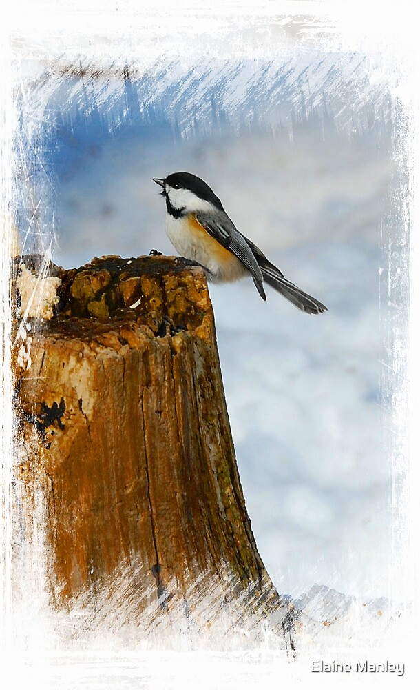 Winter Visitor  by Elaine Manley