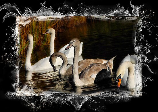 Brown and White Cygnets by Elaine  Manley