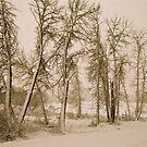 Winter's first snowfall - Sepia - Alberta, Canada by Jessica Chirino Karran