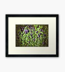 Lavender Joy Framed Print