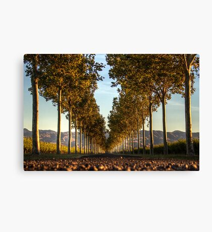 Country Entrance Canvas Print