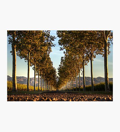 Country Entrance Photographic Print