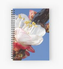 Apricot Blossom Spiral Notebook