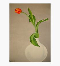 Single Red Tulip In A White Vase Photographic Print