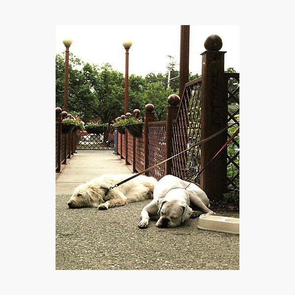 Doggone tired Photographic Print