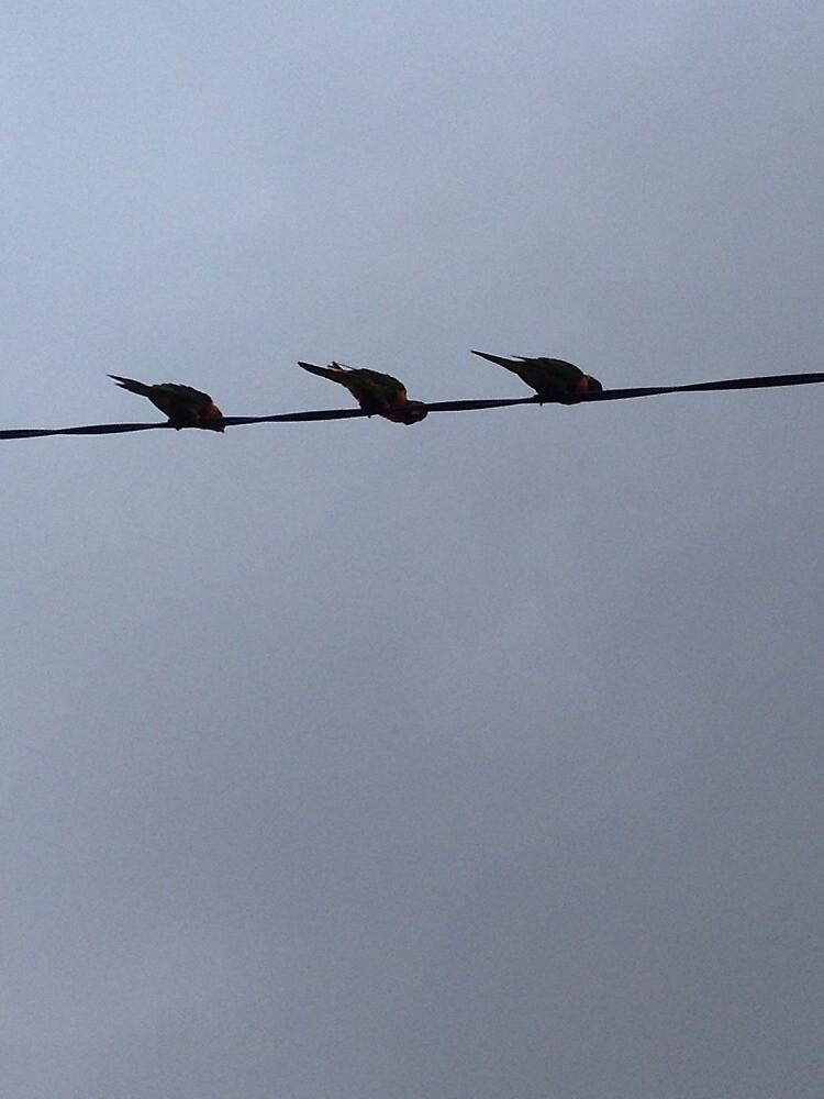 Three little birds... by fuchsiaberry
