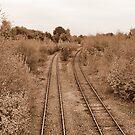 The Rails in Sepia by AnnDixon