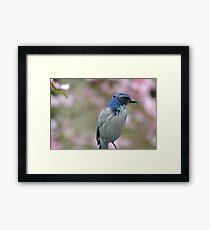 Pretty Bluebird Framed Print