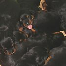 Litter Of Rottweilers and One Puppy Being Different by taiche