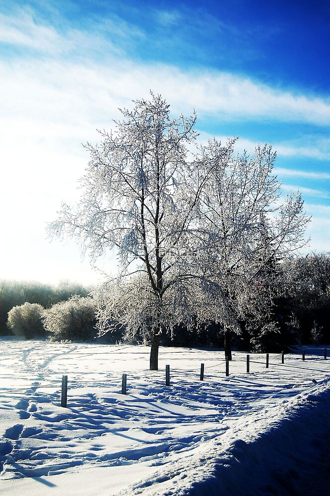 Winter Blue by Skabou