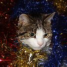 Tabby Tinsel Time! by Angela Harburn