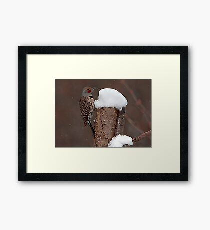 Flicker in the Snow Framed Print