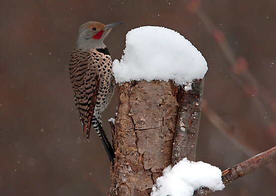 Flicker in the Snow by Martin Smart
