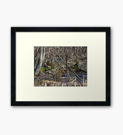 Wetland Winter Wonderland Framed Print