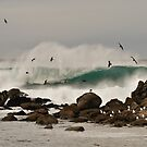 Wild Winter Beachscape by padillai