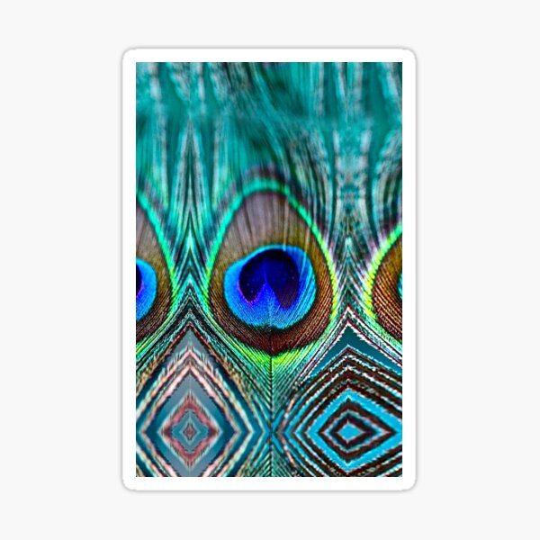 Peacock Feather Sticker