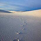 Footprints by DawsonImages