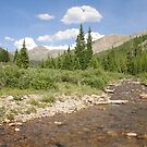South Fork Williams Creek by Paul Magnanti