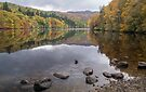 Colours at Loch Faskally nr Pitlochry, Perthshire, Scotland by Cliff Williams