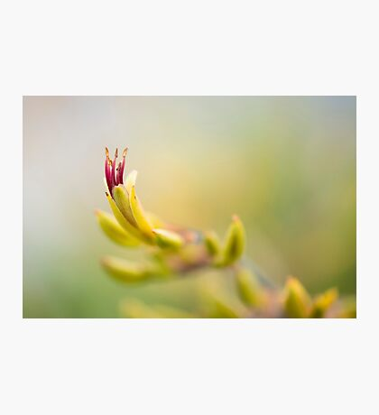 NZ Flax Photographic Print