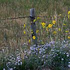 Country Fence by WishesandWhims