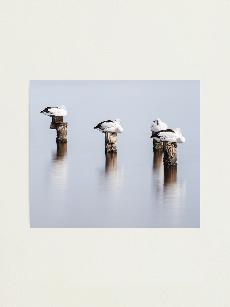 Alternate view of Stillness Photographic Print
