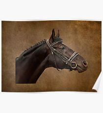 Brown Bridle Poster
