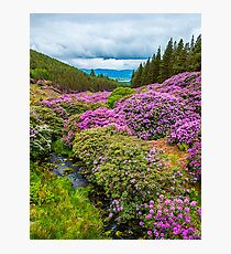 Vee Valley, County Tipperary, Wexford Photographic Print