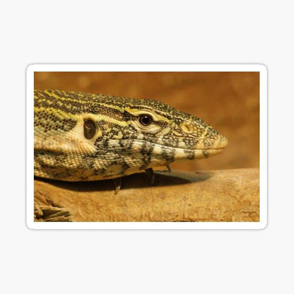 Monitor Lizard  Sticker