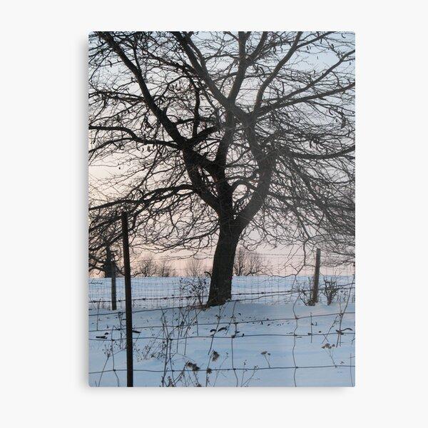 Winter Oak Silhouette at Sunset  Metal Print