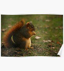 Adorable Squirrel Poster