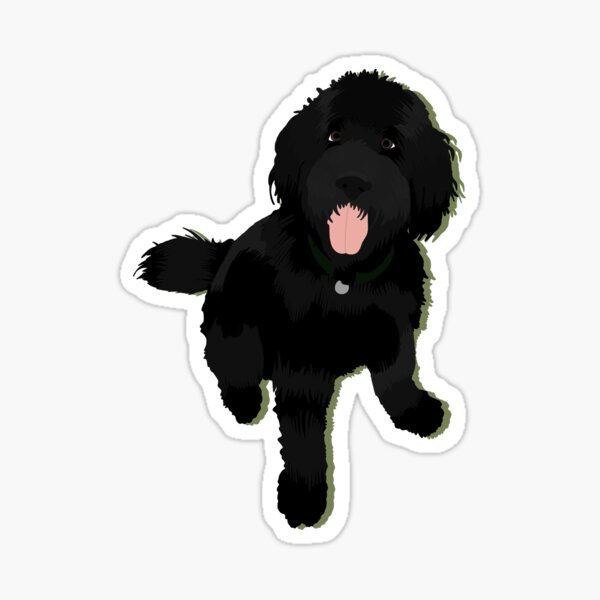 Black golden doodle  Sticker
