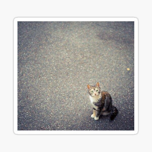 Cute little cat Sticker