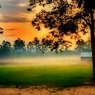 Early Morning Mist by Pat Moore