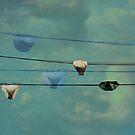 Underwear on a washing line  by Jasna