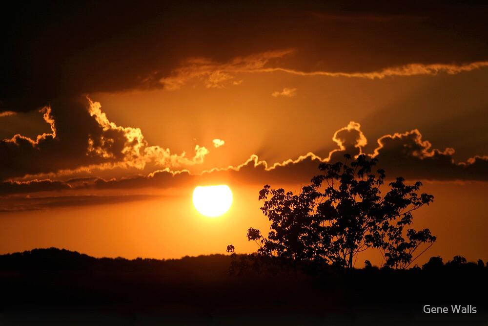 Golden Sunset by Gene Walls