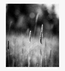 Grass field Photographic Print