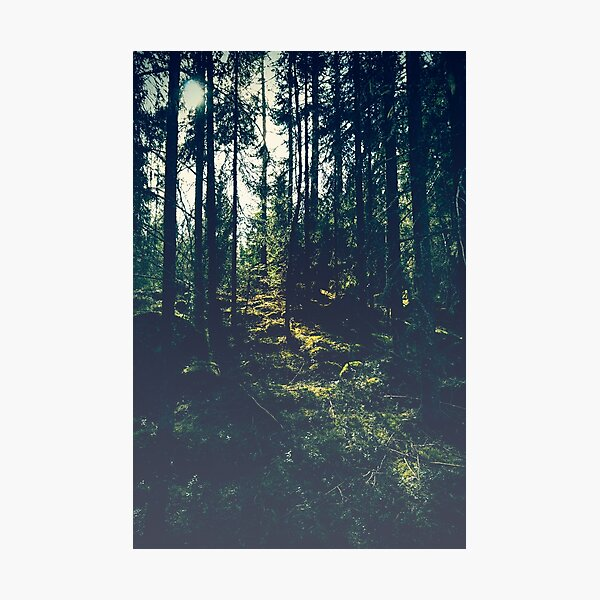 Sunlight in the woods Photographic Print