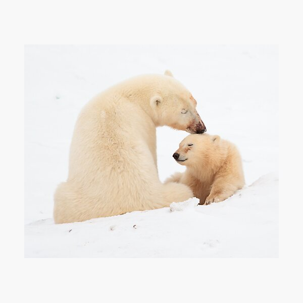 A mother's love Photographic Print