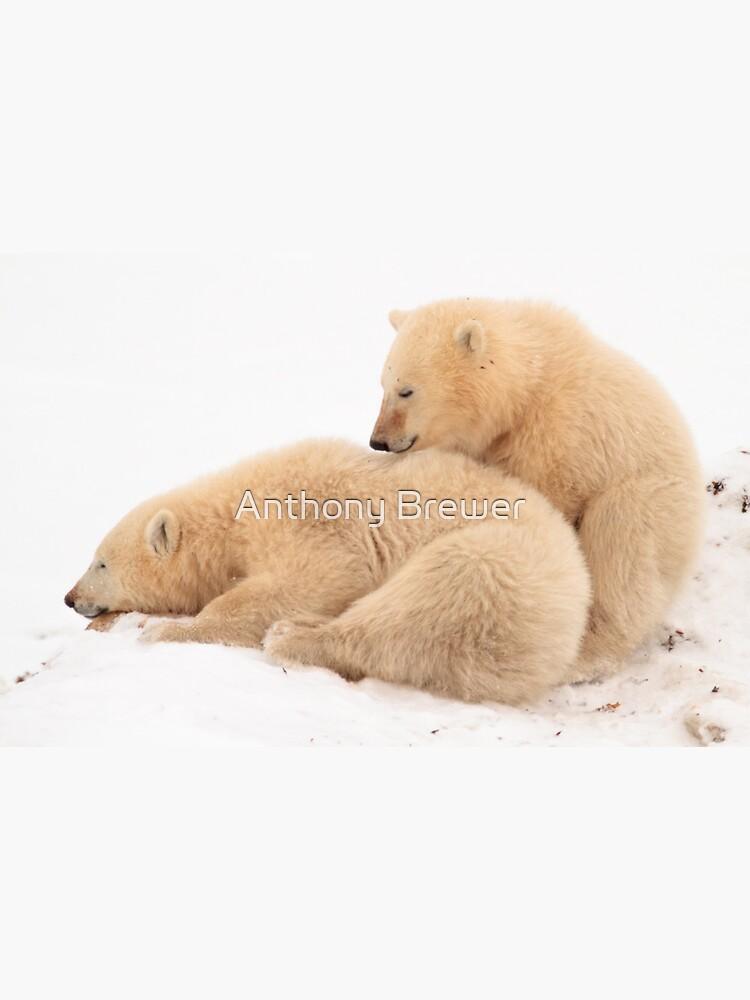Polar bear cubs by dailyanimals